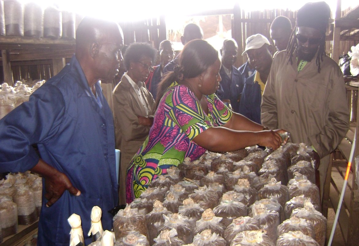 Practical Training in Mushroom Cultivation