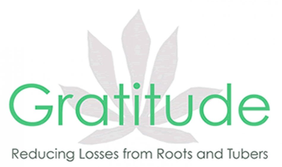 GAINS FROM LOSSES OF ROOT AND TUBER CROPS (GRATTITUDE)