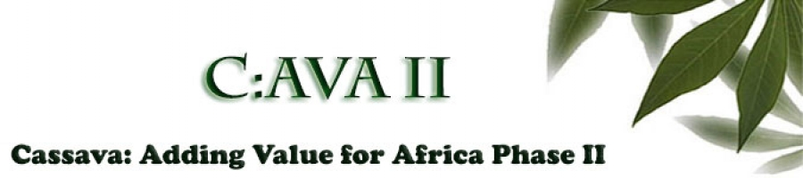 Cassava: Adding Value for Africa (C:AVA) II